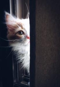 Looking around the door.